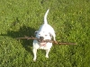 dog-with-stick