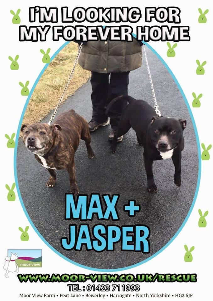 max and jasper